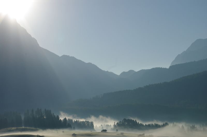 Bäume im Nebel, Zugspitzgebiet, Österreich / Trees in morning mist, Zugspitze region, Austria