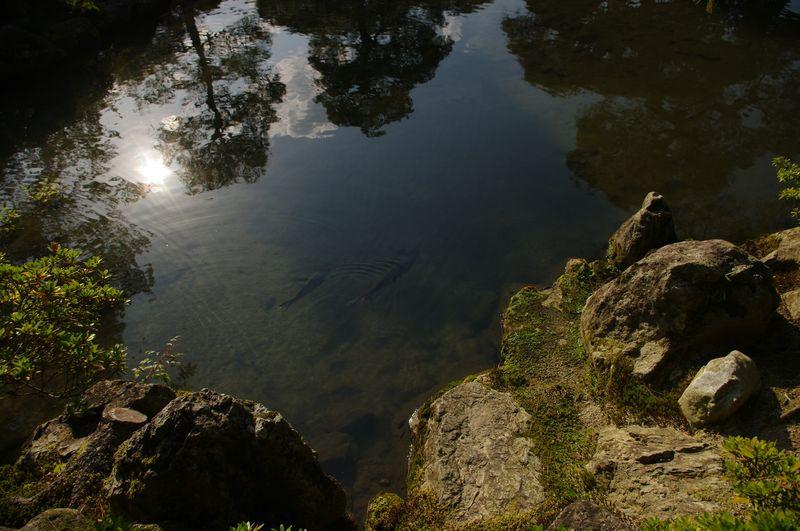 Japanischer Gartenteich / Japanese pond